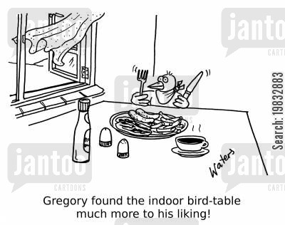 birdhouse cartoon humor: Gregory found the indoor bird-table much more to his liking!