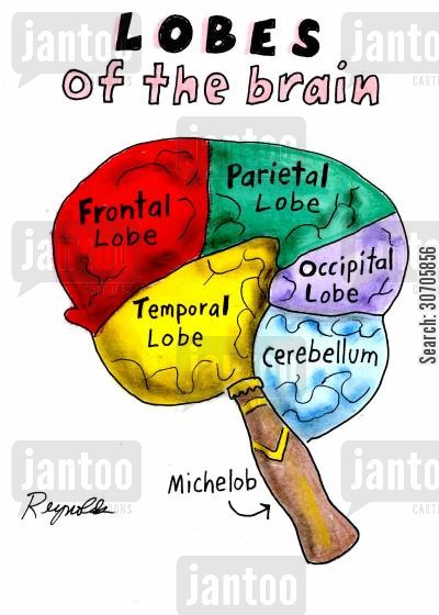 occipital lobe cartoon humor: Lobes of the Brain.