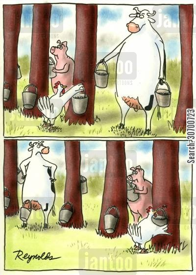 milking time cartoon humor: Maple syrup and milk collection.