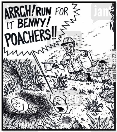 poached egg cartoon humor: 'ARRGH! RUN for it BENNY! POACHERS!!'