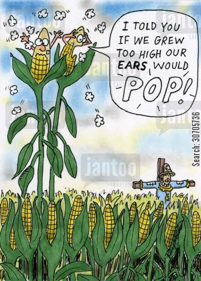 corn crops cartoon humor: 'I told you that if we grew to high our ears would pop.'