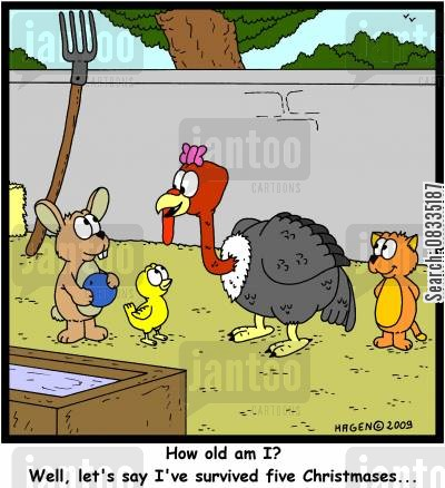 roast turkeys cartoon humor: 'How old am I? Well, let's just say I've survived five Christmases...'