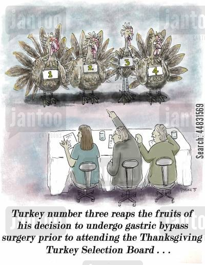thanksgiving cartoon humor: Thanksgiving number three reaps the fruits of his decision to undergo gastric bypass surgery prior to attending the Thanksgiving Turkey Selection Board...