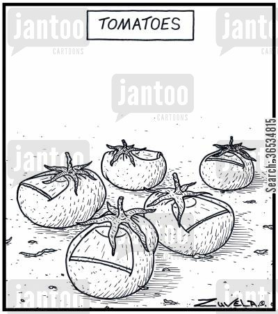 toes cartoon humor: Tomatoes in the form of Toes