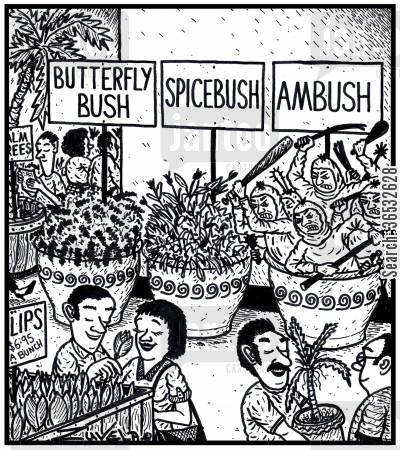 ambushed cartoon humor: Visual Gag: Butterfly Bush Spicebush Ambush.