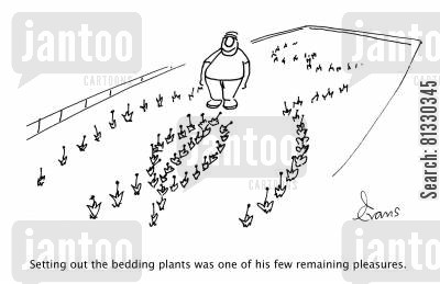 flowerbed cartoon humor: Setting out the bedding plants was one of his few remaining pleasures,