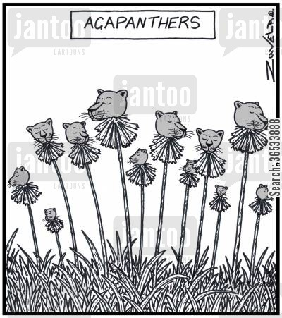 flowerbed cartoon humor: Agapanthus flowers in the form of Panthers.
