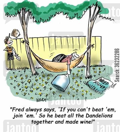 dandelions cartoon humor: If you can't beat 'em, join 'em...so Fred beat all the Dandelions together and made wine!