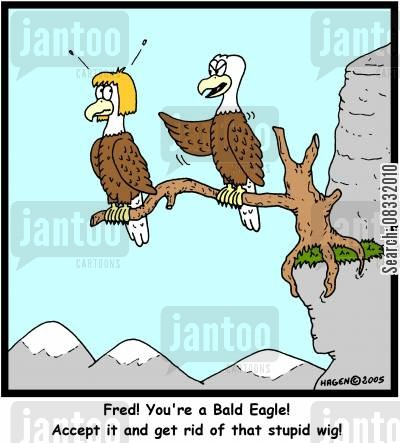 bald jokes cartoon humor: 'Fred! You're a Bald Eagle! Accept it and get rid of that stupid wig!'