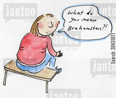 fat roll cartoon humor: What do you mean Bra Hamsters?