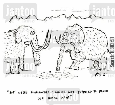 hairy animals cartoon humor: 'But we're mammoths - we're not supposed to pluck our nasal hair.'