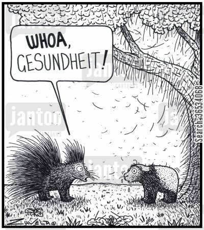south america cartoon humor: Porcupine: 'WHOA,Gesundheit!' A Porcupine has sneezed out all of his quillsspines into a tree and on the ground