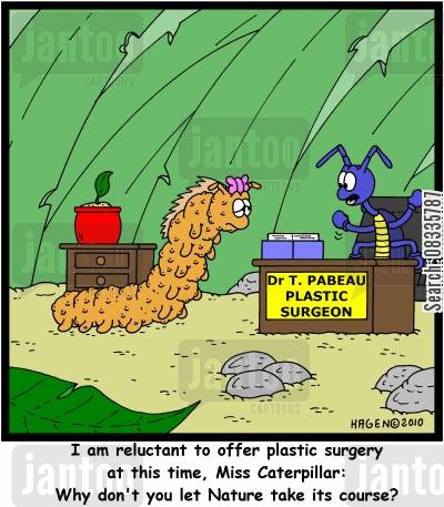 beautiful butterfly cartoon humor: 'I am reluctant to offer plastic surgery at this time, Miss Caterpillar: Why don't you let Nature take its course?'