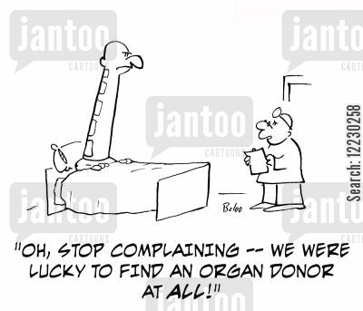 organ donor cartoon humor: 'Oh, stop complaining — we were lucky to find an organ donal at all!'