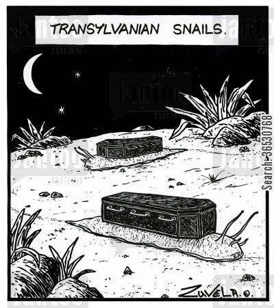 transylvannia cartoon humor: Transylvanian Snails.