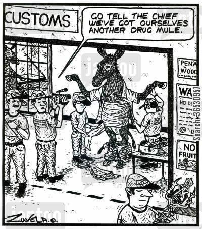 customs officers cartoon humor: (Customs) 'Go tell the chief we've got ourselves another drug mule.'