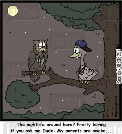 nocturnal birds cartoon humor: 'The nightlife around here? Pretty boring if you ask me Dude: My parents are awake...'