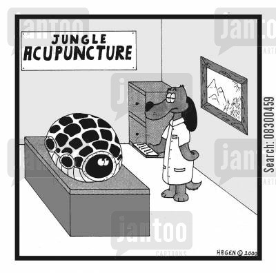 fear of needles cartoon humor: Tortoise hiding from acupuncturist.
