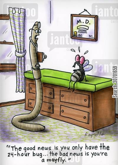 mayflies cartoon humor: 'The good news is you only have the 24 hour bug...the bad news is you're a mayfly.'