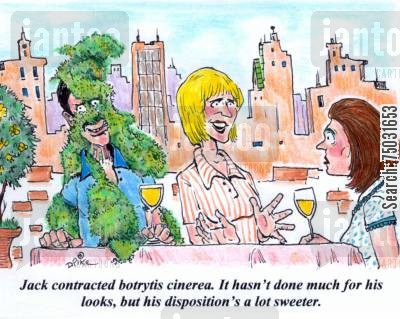 mold cartoon humor: 'Jack contracted botrytis cinerea. It hasn't done much for his looks, but his disposition's a lot sweeter.'