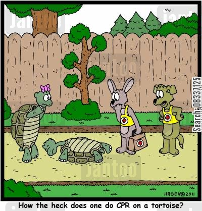 cpr procedure cartoon humor: 'How the heck does one do CPR on a tortoise?'