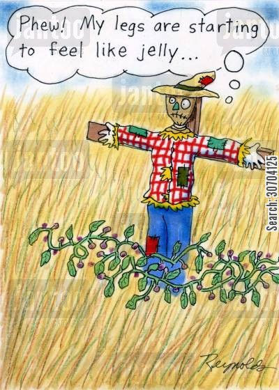 corn fields cartoon humor: 'Phew! My legs are starting to feel like jelly...'