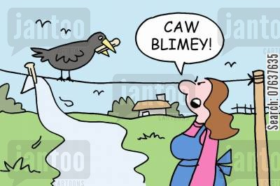 blackbirds cartoon humor: 'Caw blimey!'
