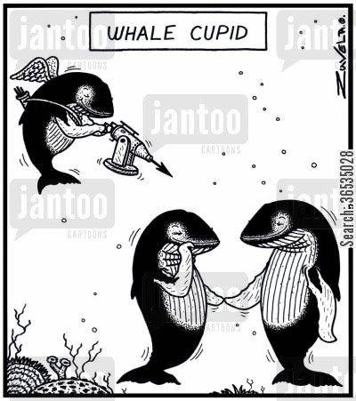 marine mammal cartoon humor: Whale Cupid: The Whale world's version of Cupid using a high-powered Harpoon as a Bow and arrow.