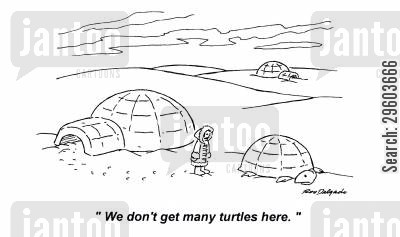 resembles cartoon humor: 'We don't get many turtles here.'