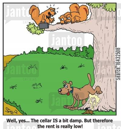 squirels cartoon humor: 'Well, yes... The cellar IS a bit damp. But therefore the rent is really low!'