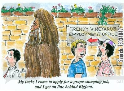 stomping cartoon humor: 'My luck; I come to apply for a grape-stomping job, and I get on line behind Bigfoot.'