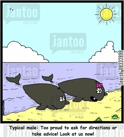 beached whales cartoon humor: 'Typical male: Too proud to ask for directions or take advice! Look at us now!'