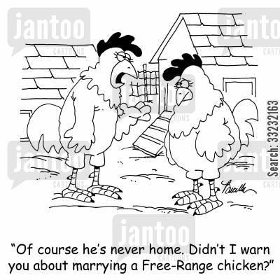 free range cartoon humor: 'Of course he's never home. Didn't I warn you about marrying a Free-Range chicken?'