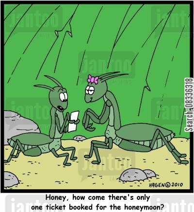 black widow cartoon humor: 'Honey, how come there's only one ticket booked for the honeymoon?'