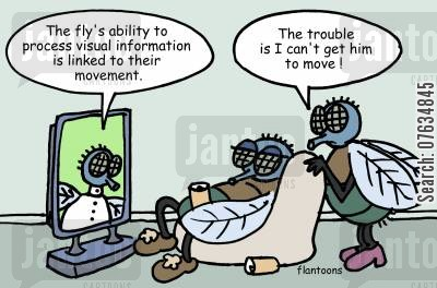 animal programs cartoon humor: The Fly's ability to process visual information is linked to their movement.