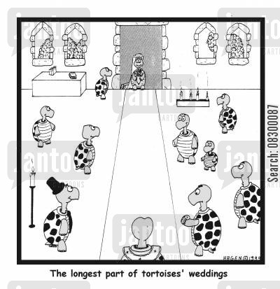 legarthic cartoon humor: The longest part of tortoises' weddings.