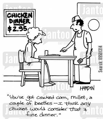 grain cartoon humor: 'You've got cracked corn, millet, a couple of beetles - I think any chicken would consider that a fine dinner.'