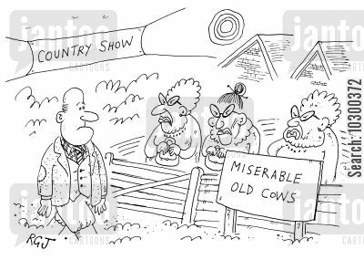 old cow cartoon humor: Miserable Old Cows
