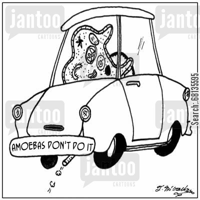 amoeba cartoon humor: Amoebas don't do it