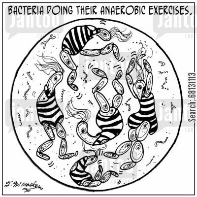 amoebas cartoon humor: Bacteria doing their anaerobic exercises.