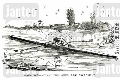 midges cartoon humor: A rower surrounded by swarming insects