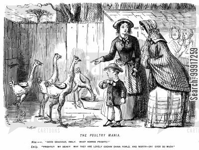 cochin fowls cartoon humor: The poultry mania - Cochin China Fowls
