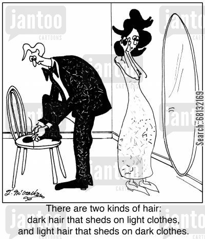 shedding cartoon humor: There are two kinds of hair: dark hair that sheds on light clothes, and light hair that sheds on dark clothes.