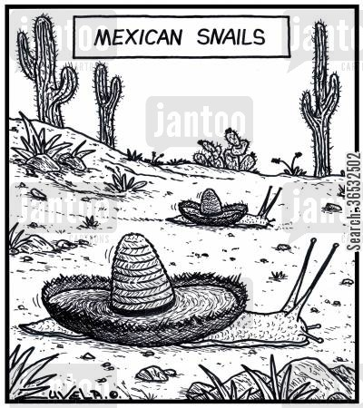 sombreros cartoon humor: Mexican snails.