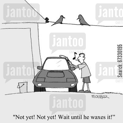pigeons cartoon humor: 'Not yet! Not yet! Wait until he waxes it!'