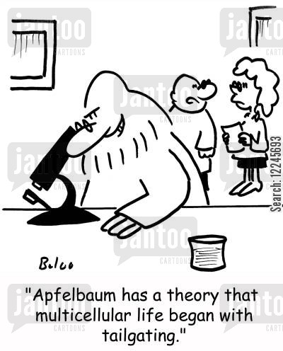 tailgating cartoon humor: 'Apfelbaum has a theory that multicellular life began with tailgating.'