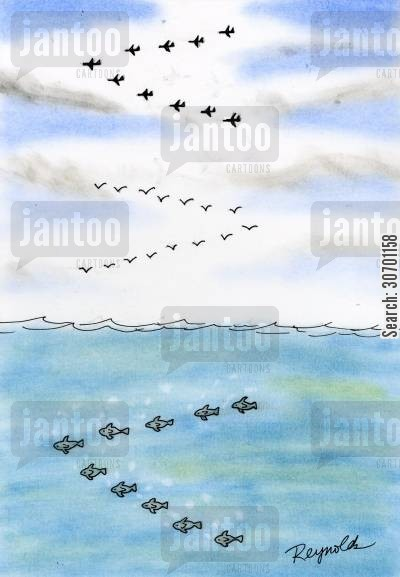 fighter plane cartoon humor: Planes fly in a v, birds fly in a v, fish swim in a v.