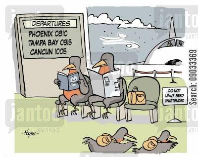 departures cartoon humor: Birds flying south for the winter.