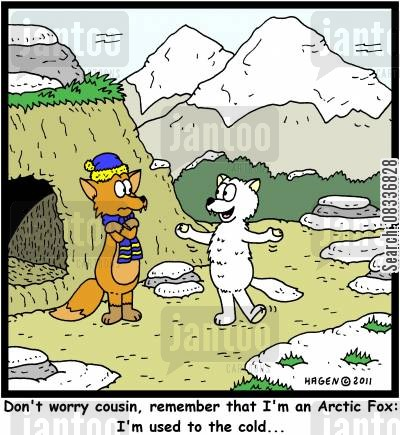 arctic fox cartoon humor: 'Don't worry cousin, remember that I'm an Arctic Fox: I'm used to the cold...'