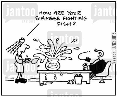 fishbowl cartoon humor: 'How are your Siamese fighting fish?'
